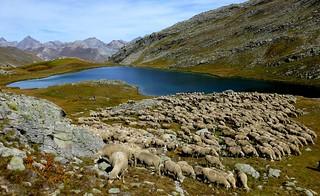 lac du Lauzanier (3)
