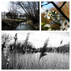 Nature calls (nathanhumberstone) Tags: lake tree art nature collage contrast canon reeds 600d