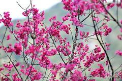 DAO-58886,-,,,,,, (Chen Liang Dao  hyperphoto) Tags: