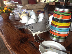 A classic Kenyan coffee break with our Table Top sporting classic Kenyan style - Thanks Dan - Missoula, MT