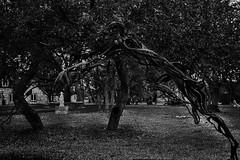 6985 (Hydrogue.HW) Tags: show art garden botanical artists sculptures sculptors
