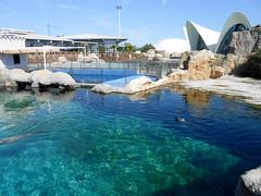 Harbour seal (Going to the Zoo with Trebaruna) Tags: valencia zoo aquarium spain oceanografic loceanografic loceanograficvalencia aquariumvalencia