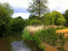 Thompson pond (Isabella plantation, Richmond park) (UK) (Grard Farenc (slowly back) !) Tags: park uk flowers trees england lake water creek fleurs pond eau unitedkingdom lac richmond arbres gb angleterre parc royaumeuni