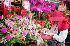 Camouflage (Nuuttipukki) Tags: pink flowers holiday festival colorful taiwan buddhism camouflage taipei