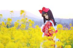 菜の花 2012/04/28 (Vincent Company) Tags: doll outdoor realdoll orientindustry fsftypetisselaura fantasticsoftfigure