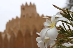 ABU DHABI,DUBA,AL AIN 956 (cami.cele) Tags: duba abudhabidubaalain