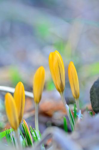 Germogli di primavera