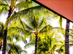Palms and Parasol - 2016 (Patricia Colleen) Tags: wailea maui hawaii palmtree