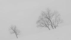 Follow Me Kiddo (_Sander V_) Tags: winter trees snow uphill nikon coolpix p7800