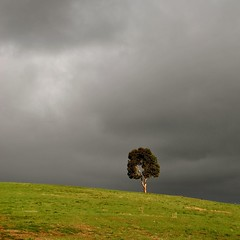 standing alone (Ian Riley) Tags: brown tree green grass clouds dark one afternoon hill australia adelaide late sa southaustralia mitcham
