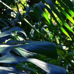 Jungle Fresh (Dominique Guillochon) Tags: california trees plants nature sandiego jungle balboapark junglefresh