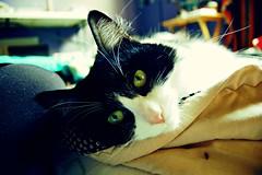 Lola (maya.lynn) Tags: blackandwhite green cat pretty lola kitty greeneyes