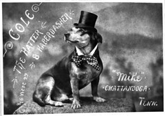 Mike the Dog (chattlibrary) Tags: dog mike 9thstreet 1890 hatter haberdasher mlkingblvd welldresseddog chattanoogaalbums georgewcole