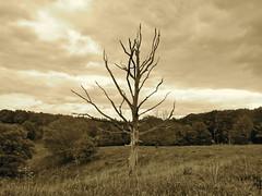 Dead tree (Frans Schmit) Tags: tree boom deadtree posbank fransschmit