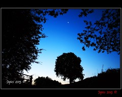 The Skys The Limit. (Picture post.) Tags: trees moon green nature sunrise landscape gate silhouettes hedge summertime bluehour
