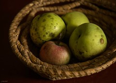 apples (Jen MacNeill) Tags: old light shadow stilllife food apple fruit basket spotty heirloom apples organic jennifermacneilltraylor jmacneilltraylor jennifermacneill jennifermacneillphotography