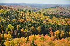 Automne au Saguenay, Mont Lac Vert (Warren Qc) Tags: autumn summer mountain canada colour tree america forest montagne automne quebec indian t foret arbre indien saguenay couleur amerique