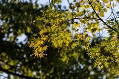 _DSC2634.jpg (Osamu1965) Tags: park autumn sky castle fall japan night garden nikon zoom  nikkor  70300mm   vr afs okayama     d600  f4556  afsvrzoomnikkor70300mmf4556gifed