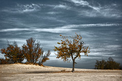 I'm so glad I live in a world where there are Octobers. (Wim Koopman) Tags: autumn light shadow sky holland color tree netherlands dutch leaves bush sand nikon moody gloomy desert dunes nederland atmosphere duinen drunense loonse d5200