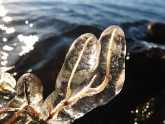 Vesijärvi winter (saschsasch) Tags: winter ice suomi finland frozen lahti worms vesijärvi