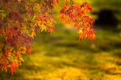 南禅寺(もみじ) (のの♪) Tags: 京都 紅葉 南禅寺