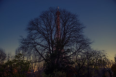 Paris : Hide and Seek (birdyconnected) Tags: travel sunset sun moon paris france tree tower nature silhouette lune landscape soleil tour eiffel streetphoto paysage arbre