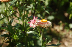 "Flowers at Delano Garden <a style=""margin-left:10px; font-size:0.8em;"" href=""http://www.flickr.com/photos/91915217@N00/12450213163/"" target=""_blank"">@flickr</a>"
