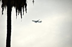 In from Taiwan (Pedestrian Photographer) Tags: california park ca sky lake tree plane airplane grey la los eva cloudy angeles air echo gray taiwan palm airline february feb taiwanese ribbet 2014 evaair pedestrianphotographer dsc7433b