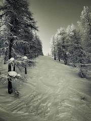 Sauze Off Piste (Furious Zeppelin) Tags: trees italy snow cold lumix frost off panasonic piste sauze tz8 furiouszeppelin fz