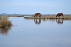 Horse Romance 1