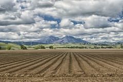 DSC_6505 (RHMImages) Tags: ca lines clouds landscape nikon farm explore rows mtdiablo brentwood dramaticsky d600