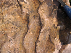 Asymmetrical ripple marks in quartzite (Baraboo Quartzite, upper Paleoproterozoic, 1.7 Ga; southern shore of Devil's Lake, Devil's Lake State Park, Wisconsin, USA) 8 (James St. John) Tags: park lake wisconsin state ripple south devils marks ranges ripples range asymmetrical quartzite baraboo precambrian paleoproterozoic proterozoic