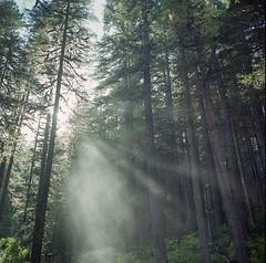 Sol of the Sun (Aaron Bieleck) Tags: trees light sun mist 6x6 film analog forest square 120film pacificnorthwest wa olympicnationalpark pnw lightrays hasselblad500cm solducfalls filmisnotdead fujipro160ns 60mmct