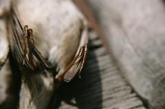 Canon AL-1 + Canon FD 50mm lens + Holga MLS lens (danielcane) Tags: park colour bird film ecology birds animal animals fauna 35mm canon dead death 50mm fuji superia wildlife greenwich feathers feather iso negative claw 35mmfilm sparrow fujifilm analogue corpse expired peninsula 800 claws unfortunate decomposed fd deceased canonal1 expiredfilm colournegative selondon xtra decomposing c41 800iso ecologypark greenwichpeninsula al1 50mmlens fdmount fdlens holgalenses greenwichpeninsulaecologypark 7yearsexpired holgamacrolens holgamls holgamlslens holgamlslensset holgalensesal1