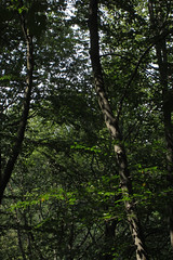 forest (Molly Des Jardin) Tags: park trees light shadow usa green leaves forest state pennsylvania sunny lancaster 2014 susquehannock drumore 43215mm