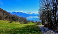 De verts et de bleus (Diegojack) Tags: chexbres vaud suisse paysages campagne léman lac routes