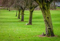 In Memory of the Fallen (Khalid H Abbasi) Tags: nature nikon d90 england coventry memory fallen earlsdon tree outdoors warmemorialpark