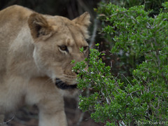 _2252013.jpg (Brian 330 in South Africa) Tags: