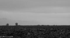 l orizzonte (fiorellomannaia) Tags: selvatico selvaggio santasevera nature marenatura macchiatonda regionelazio oasi areaprotetta wild aurelia flora avifauna park fauna riservanaturale castello civitavecchia