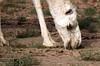 DSC00859 (Instagram x3abr twitter x3abrr) Tags: نار سيارة حيوانات السعودية حطب نيسان صحراء رمل شجر عدسة قرية ثعبان باترول سوني جيب القصيم سحلية كامرة زوم ثعابين الرربيعية الفا٥٧ alrrabieihpuebloqassim arabiasauditaserpienteárbolesdemaderadefuegodelaarenapatrullajeepnissankamrhsonyalpha57animalesserpienteszoomlagartolentedesierto