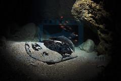 2012 03 METTRA OCEAN INDIEN 0722
