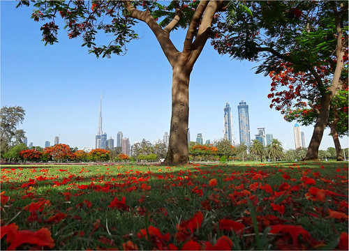 Thumbnail from Safa Park
