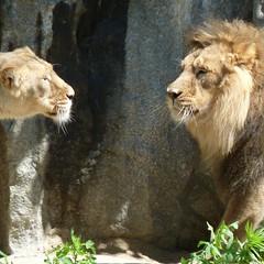 Face to face (lookaroundandsee) Tags: berlin zoo