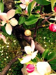 Home sweat home :) (nici_xoxo) Tags: pink tree cute green love apple grass animal animals garden tiere dad little it papa gras grün garten schnecke baum süss apfel tier appletree bei apfelbaum polle uploaded:by=flickrmobile flickriosapp:filter=nofilter