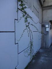 DSC01317 (andre vautour) Tags: bridge favorite streetart green wall graffiti blog paint published cement vine andrevautour torontoset wordset
