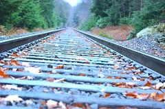Rail Road during Fall (JamesPollock3) Tags: road autumn fall season serious pussy tracks rail beam motivation balance meditation jogging runner