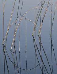 Reeds and Reflections (SkyeWeasel) Tags: skye scotland lochcillchriosd lumixg3
