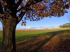 Landscape with tree. (Joseph Skompski) Tags: autumn fallleaves tree fall leaves landscape cornfield pennsylvania farm hershey hersheypa favescontestwinner thechallengefactory