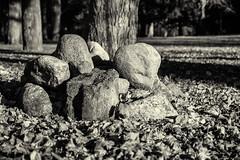 2013-10-31-Herbstfotos-20131031-092940-i082-p0065-_Bearbeitet115-SLT-A77V-40_mm-.jpg