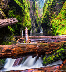 Into the Gorge (Bronwyn Illingworth) Tags: water oregon river waterfall moss logs columbia gorge oneonta
